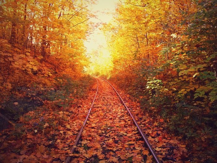 Autumn Colors Colors Of Nature Woods Fallen Leaves Autumn Railroad Zabrze Silesia