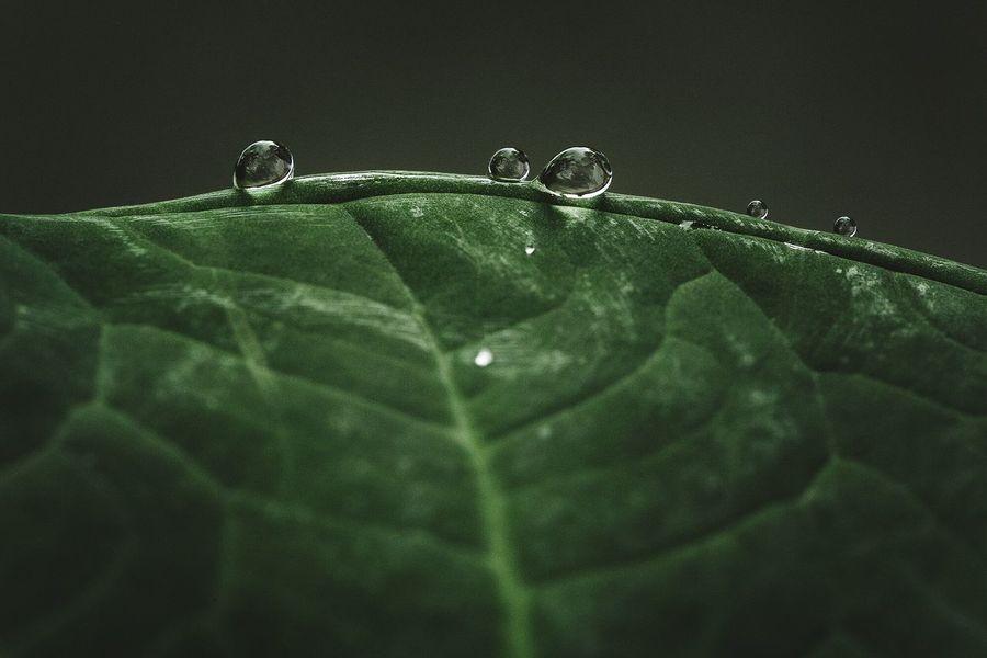 Droplets Nature Macro Waterdrops