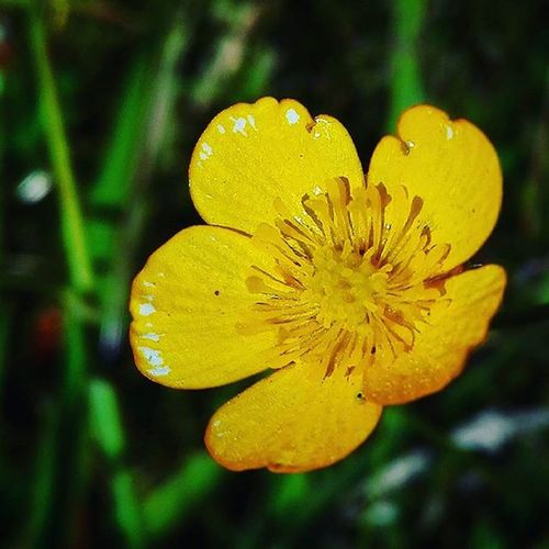 Yellow 9Vaga_ColorYellow9 Buttercup Wildflowers Af_floral Af_macro Birds_bees_flowers_n_trees Bbft_flowers Flowersandmacro Ig_4every1_yellow Flowersandmacro Af_floral Floralwaltz Birds_bees_flowers_n_trees Tt_rt_nature Rebelsunited_nature Rsa_nature Natureromantix Ig_masterpiece Pocket_pretty Colors_ofourlives Tv_colors Pocket_colors Rainbow Wall Colors colourscolorfulcolourfulbe_one_coloursigw_colorsloves_united_colorstotal_colorspicturetokeep_flowers