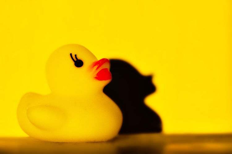 yellow bath duck on a yellow background, flat style Animal Animal Representation Animal Themes Bird Close-up Copy Space Flat Indoors  No People Representation Rubber Duck Single Object Still Life Toy Trend Yellow