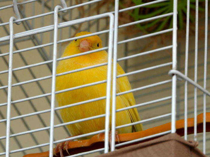 Bird Yellow