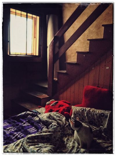 My World Cat Hanging Out Katze Bed My Studio Snapseed IPadography Artistscats