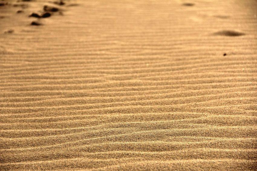 鳥取砂丘 風紋 Tottori, Japan Nature Full Frame Pattern No People Tranquility Sand Backgrounds Day Field Outdoors Beach Growth Beauty In Nature Close-up Grass 日本 Travel Art Is Everywhere The Great Outdoors - 2017 EyeEm Awards