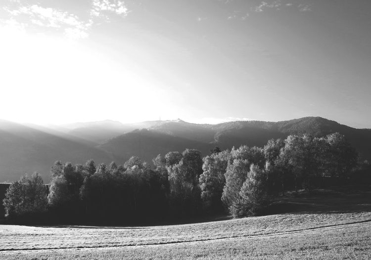Autumn Beauty In Nature Black And White Countryside Growth Landscape Majestic Mountain Mountain Range Nature Outdoors Pathway Physical Geography Scenics Monochrome Photography Season  Solitude Tree Wilderness Area