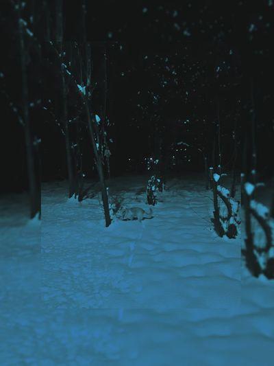 Frozen trees on field in forest