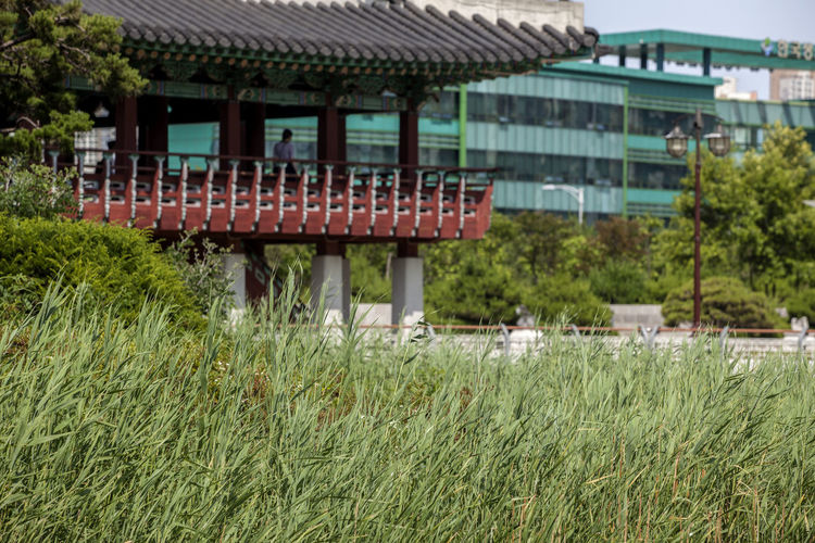 Architecture Beauty In Nature Building Exterior Built Structure Day Exterior Field Fountain Grass Grassy Green Green Color Growing Growth Lawn Michuhol Park Nature No People Outdoors Plant Residential Structure Rural Scene Sky Songdo, Incheon Tranquility