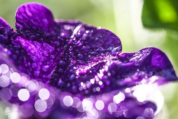 Purple Defocused No People Close-up Shiny Nature Multi Colored Indoors  Day Freshness Wet Water Droplets Droplets, Water Droplets, Flowers  Droplets On Flower Dropmaster Bokehlicious Bokeh Photography Bokeh Bubbles Bokeh Balls Focus After The Rain Botanical Pretty Beautiful