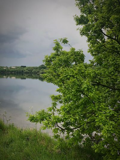 Plant Tree Green Color Water Growth Sky Beauty In Nature Nature Lake Tranquility Cloud - Sky Scenics - Nature Day Reflection Outdoors Branch Tranquil Scene