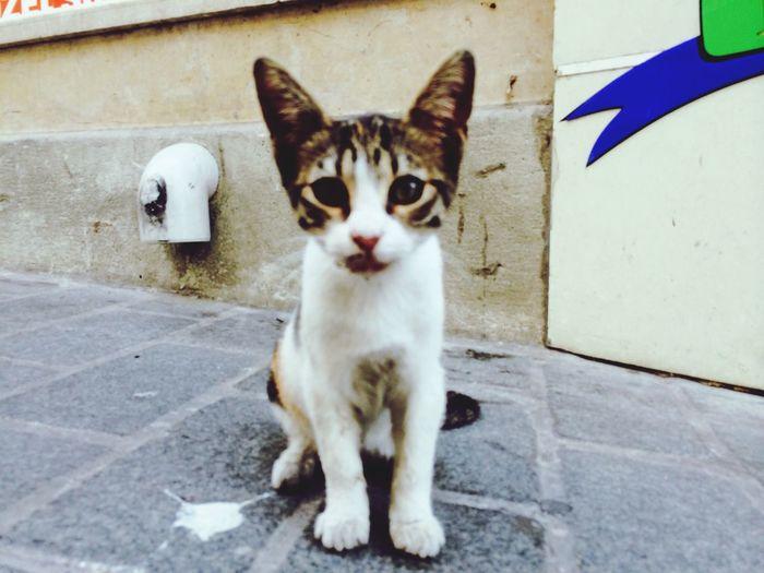 Kitten My First Cat Photo Cat Eyes Random Encounter