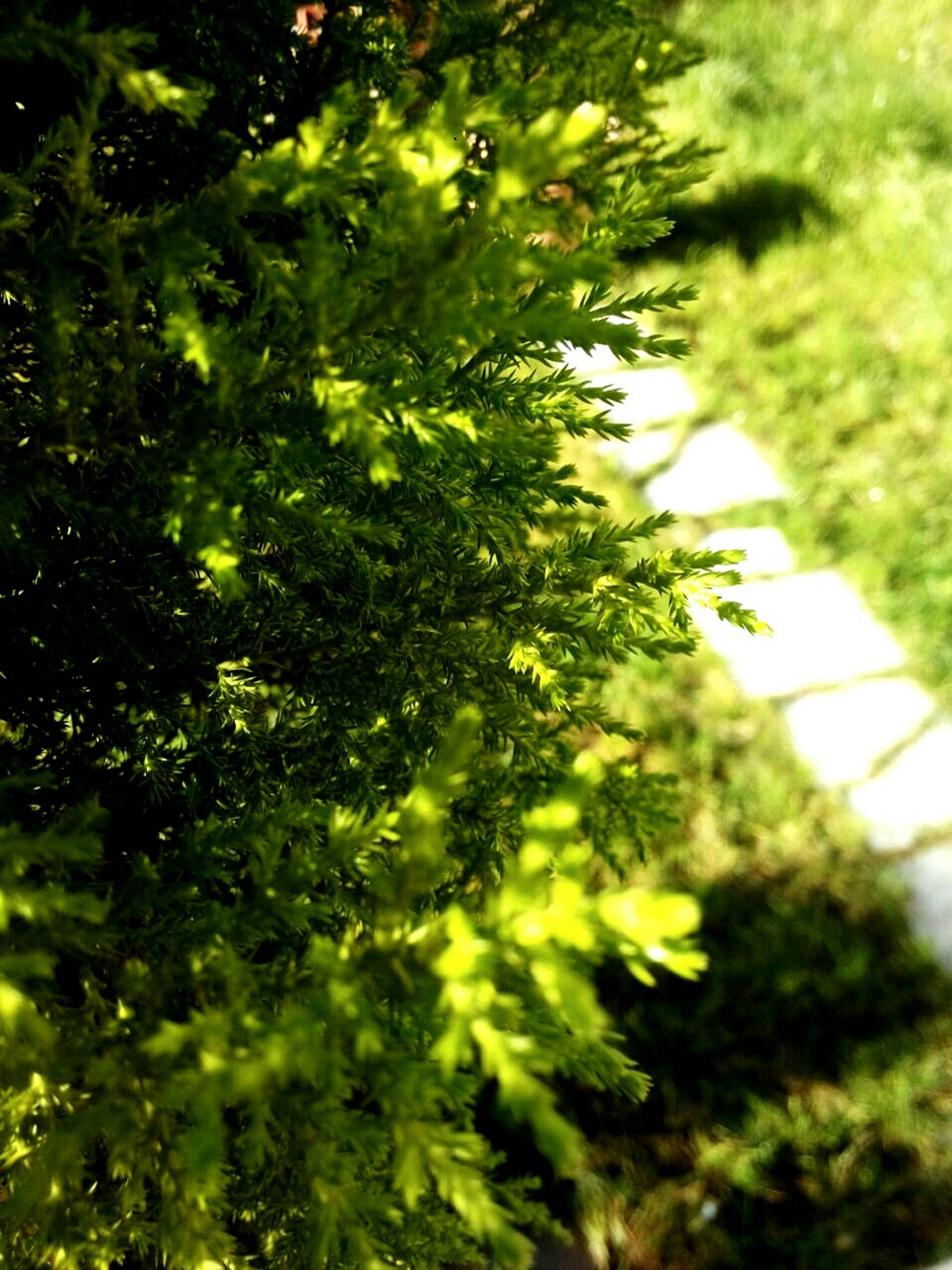 green color, tree, growth, leaf, low angle view, nature, branch, plant, close-up, green, day, sunlight, selective focus, no people, lush foliage, outdoors, beauty in nature, tranquility, focus on foreground, growing