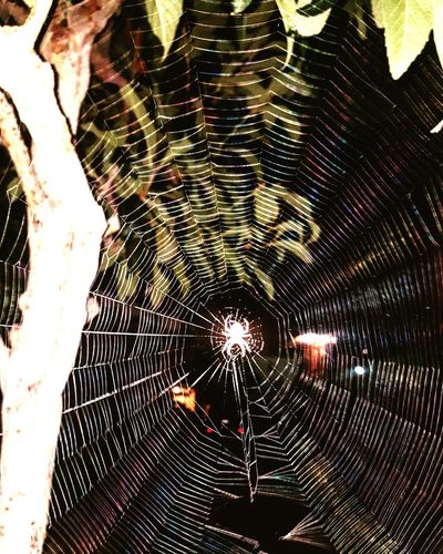 Spider Web Backgrounds No People Outdoors Full Frame Nature Fragility Close-up Hollywood Firework Spiders Glow Glowing Nightshot Colors