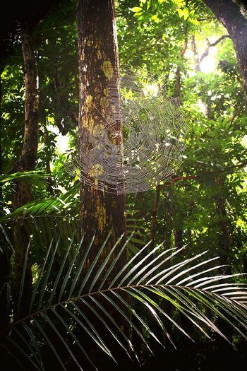 森林的蜘蛛網 EyeEm