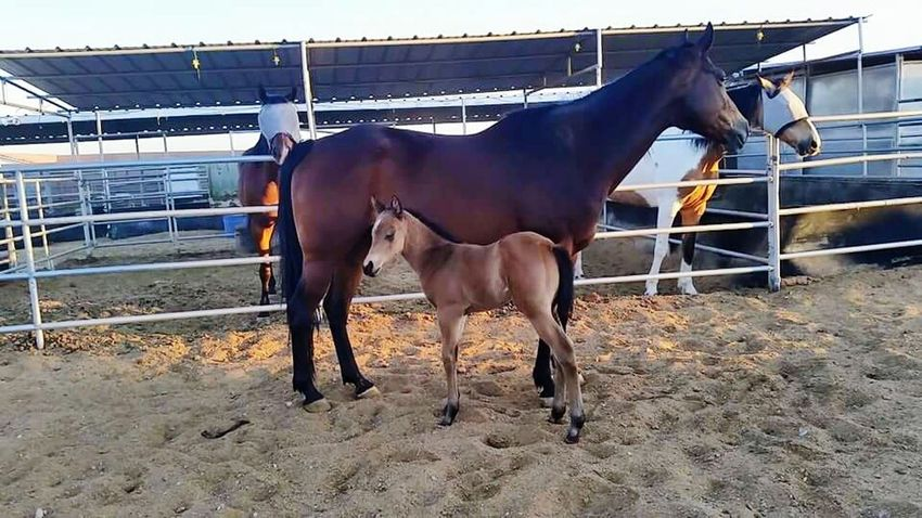 Baby Dixie Mama And Baby Cute Awww Horse