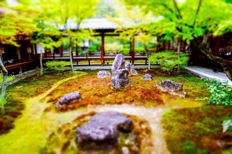 Relaxing Japan