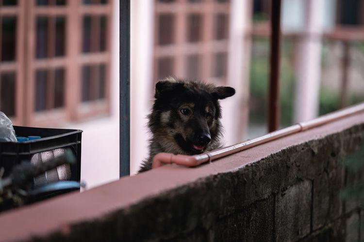 Portrait of a dog looking through window