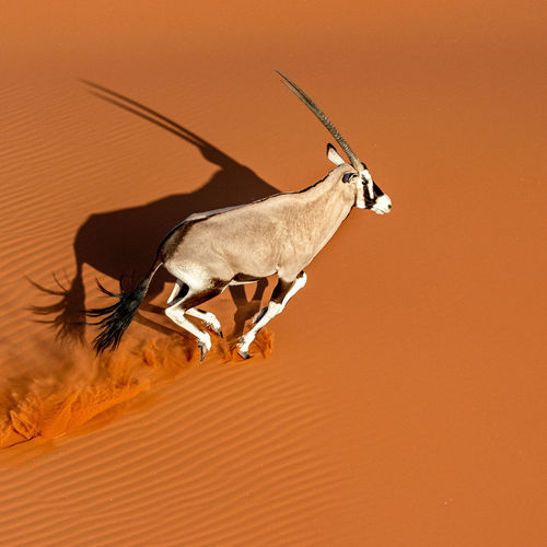 View of a horse on sand