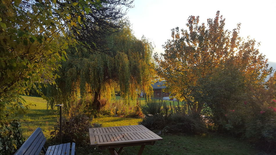 my garden Garden Afternoon EyeEmNewHere EyeEm Nature Lover Nice Weather Tree Outdoors Growth Nature No People Day Grass
