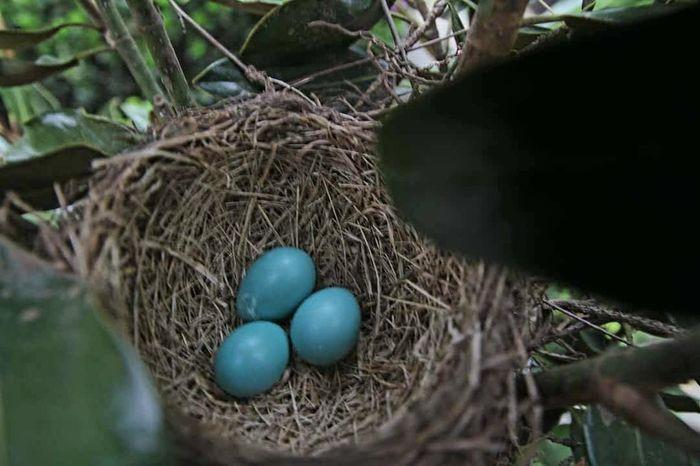 New worlds beginning... Nature Bird Nest Bird Eggs Blue