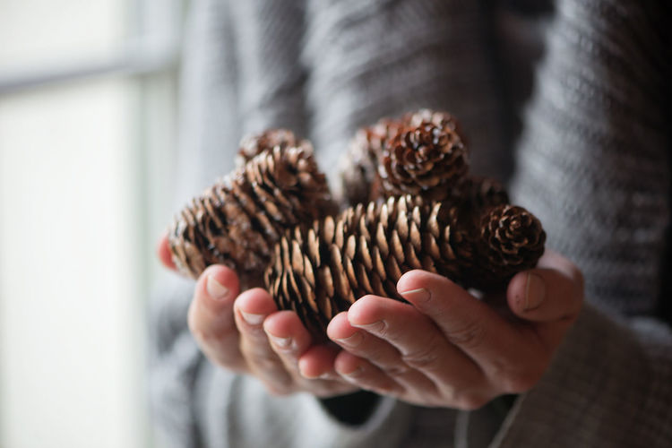 Midsection Of Woman Holding Pine Cones