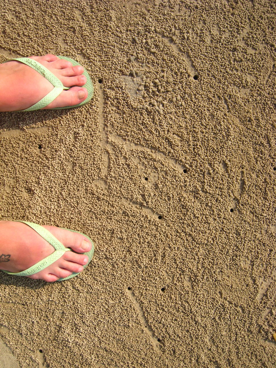 Low Section Of Person Standing On Wet Sand