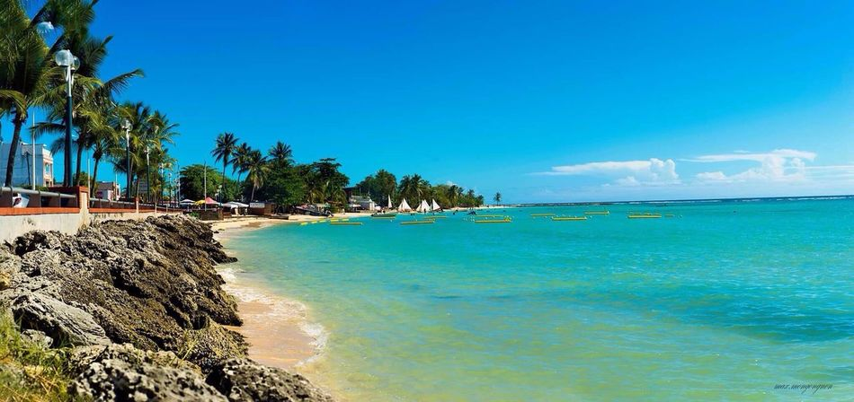 Sainte-Anne Sea Palm Tree Beach Blue Tropical Climate Sky Water Tree Tranquility Travel Vacations Nature Tourist Resort Palm Travel Destinations Landscape Scenics Beauty In Nature Cloud - Sky Outdoors Nature_perfection Nature Photography Flower Collection Tropical Paradise Idyllic