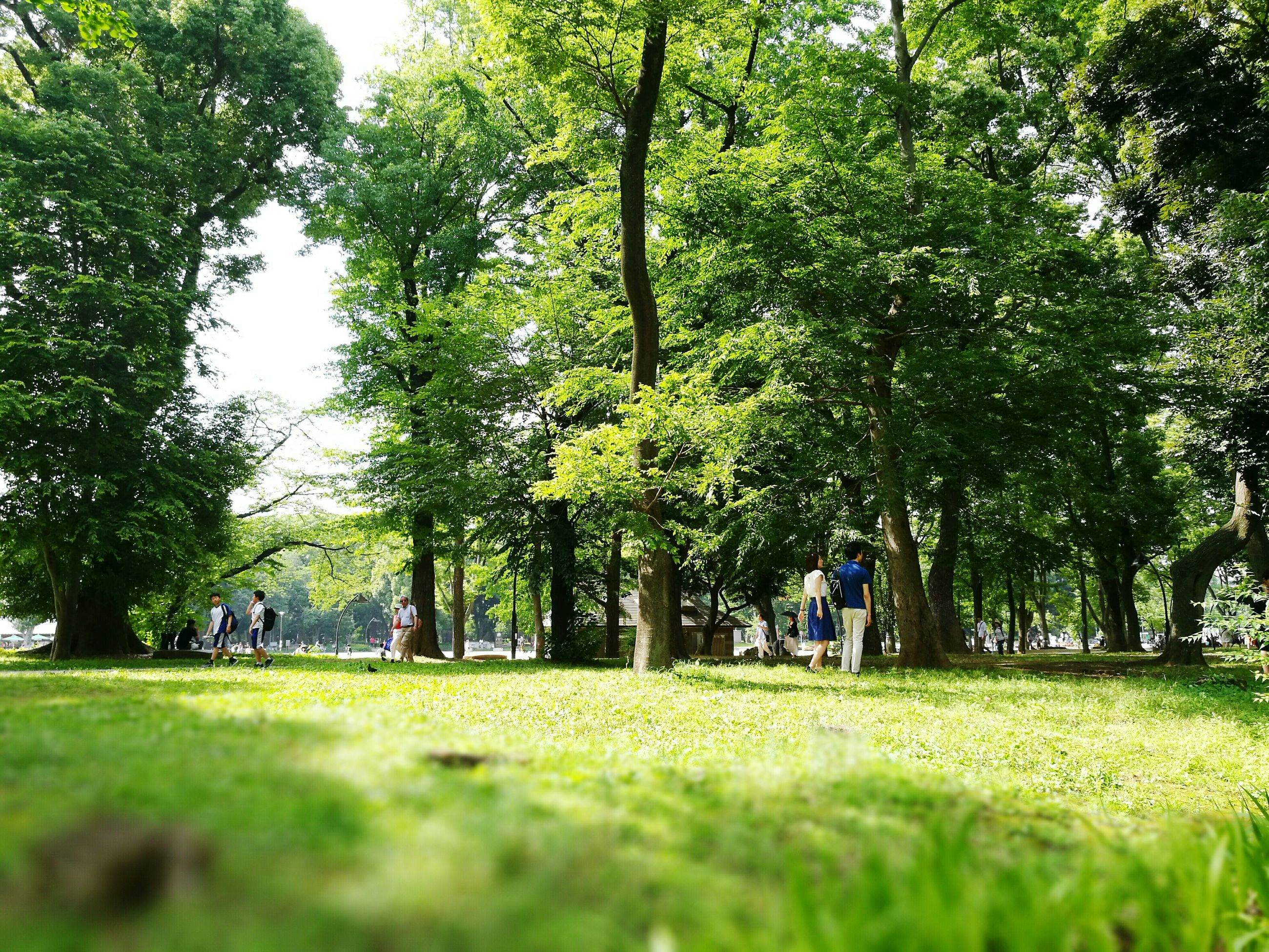 tree, grass, green color, growth, park - man made space, tranquility, nature, lawn, park, grassy, sunlight, tranquil scene, field, tree trunk, beauty in nature, branch, shadow, incidental people, bench, day