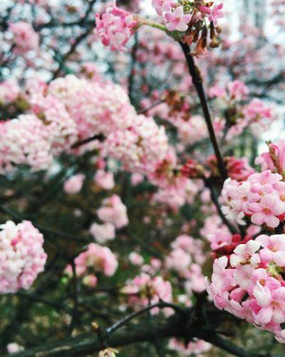 Blooming Spring Flowers Tree EyeEm Nature Lover Beautiful Nature Nature