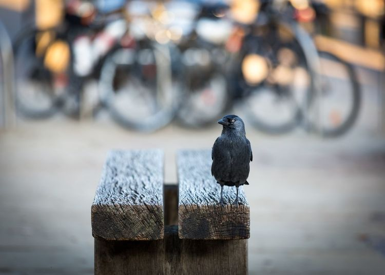 High angle view of raven perched on wood