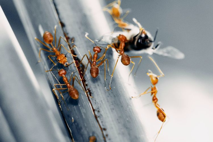 Color of teamwork Animal Photography Animal Themes Animals In The Wild Ant Close-up Depth Of Field Detail Ground Hunter Hunting Insect Leaf Macro Move Nest No People Selective Focus