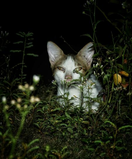 One Animal Animal Themes No People Looking At Camera Night Domestic Animals Plant Pets Leaf Portrait Animals In The Wild Outdoors Grass Nature Close-up Ruralcat Wanderlust My Photography Cat Nightphotography Ruralphotography EyeEmNewHere