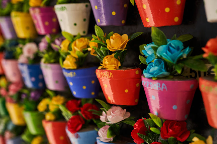 Close-up of potted plants at market stall