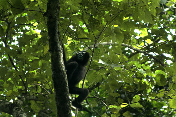 Low angle view of bird perching on tree in forest