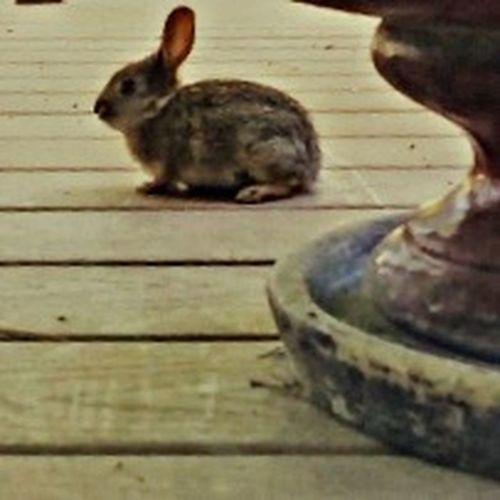 Easter Ready Bunny  Bunny 🐰 Spring Cute Cute♡ Cuteasabunny Cute As A Bunny The Runaway Bunny The Runaway Bunny