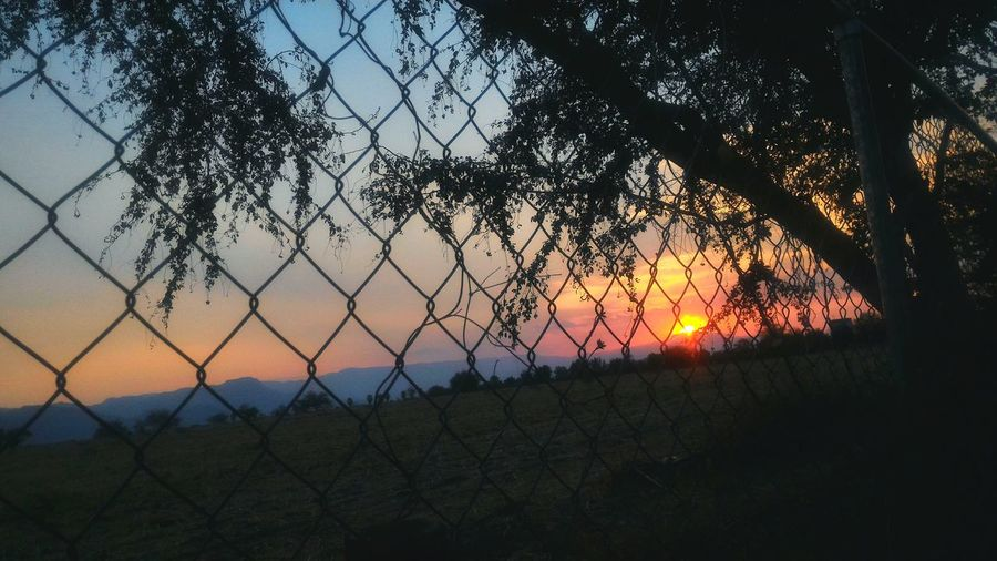 Lugares a donde escapar // Sunset Nature Tree No People Sky Tranquil Scene Landscape EyeEmNewHere