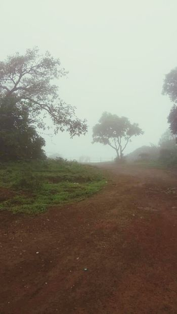 Outdoors Nature Beauty In Nature Tree FogyDay Moisture In Air Fog No People Sky