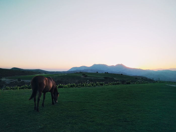 Animal Themes No People Mountain Sky Nature Domestic Animals Agriculture Sunset Outdoors Rural Scene Beauty In Nature Day Landscape Animal Nature Animals In The Wild One Animal Farm Horse Horses