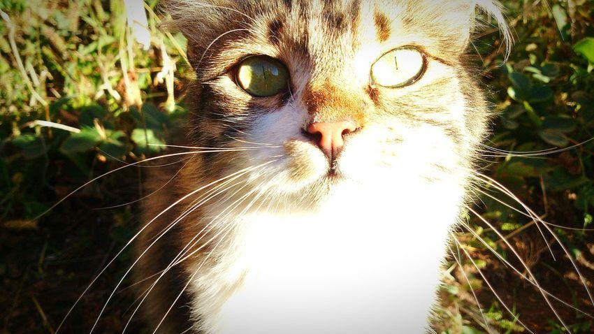 Cat My Cats