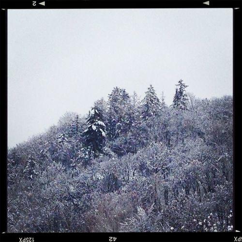 Winter In Sakura Kingdom