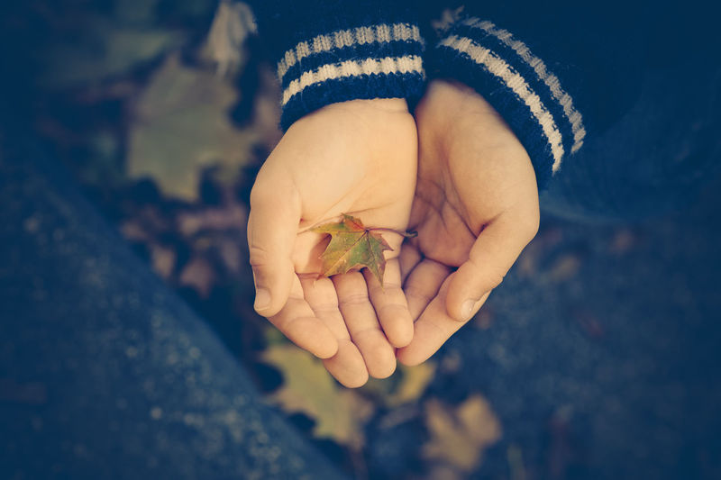 little hands of children with a leaf Autumn colors Beauty In Nature Careful Casual Clothing Child Childhood Close-up Day Focus On Foreground Fragility Holding Human Body Part Human Hand Leaf Little Hands Nature One Person Outdoors People Real People Sweater Tenderly