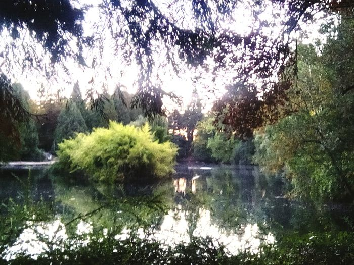 Laurelhurst Reflection Water Day Lake Beauty In Nature No People Outdoors Waterfront