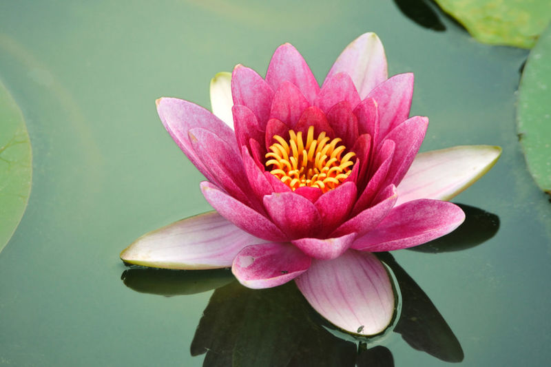 Water lily is national flower of bangladesh................