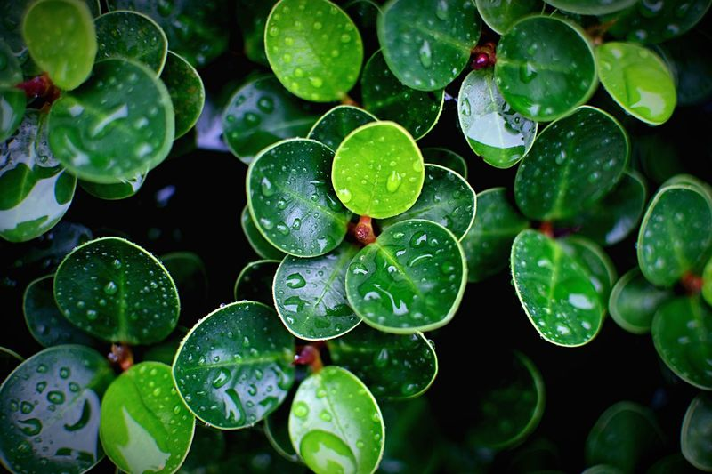 After rain Afterrain Leafs Photography Leafs Green Nature Green Color Water Leaf Plant Part Green Color Growth Water Wet Plant Nature No People Drop Freshness Close-up Outdoors Day Backgrounds Floating On Water