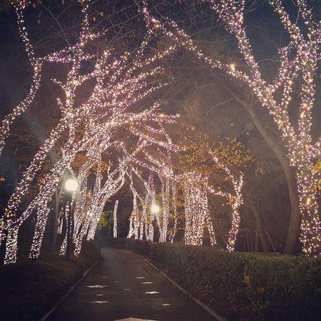 Night Illuminated Tree Light Tree Canival