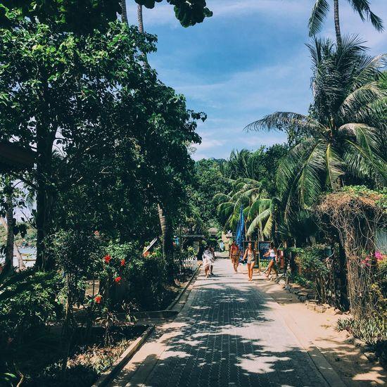 Little Paradise. Koh Tao. Koh Tao Thailand Travel Trip Love Sairee Beach Palm Tree Traces