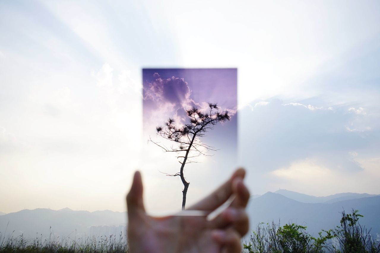Cropped image of person holding glass in front of tree