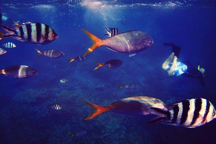 The Explorer - 2014 EyeEm Awards EyeEm Nature Lover EyeEm Filter Food P OLYMPUS STYLUS TG-2 fish, fish, fish, and...human......in Palau.