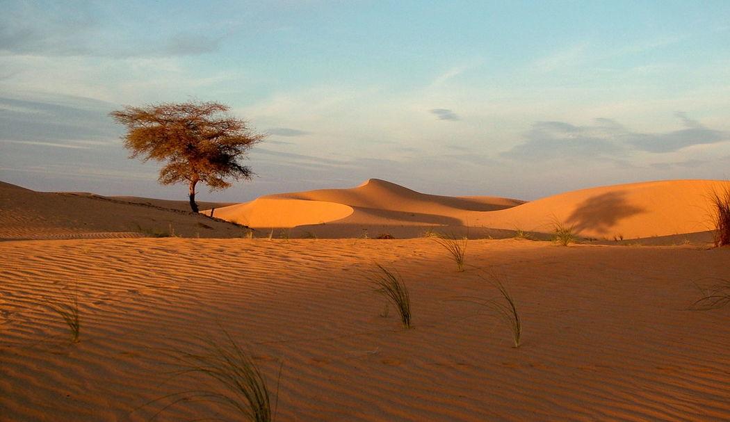 DESERTO DELL'ADRAR Adrar Arid Climate Atmospheric Beauty In Nature Climate Cloud - Sky Desert Deserto Environment Land Landscape Mauritania Nature No People Non-urban Scene Outdoors Plant Remote Sand Sand Dune Scenics - Nature Sky Tranquil Scene Tranquility Tree #FREIHEITBERLIN