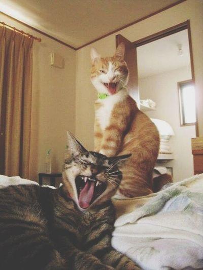 MORNiNG WORLD! Funny Pics Love Animal Cat How do ya do!!!