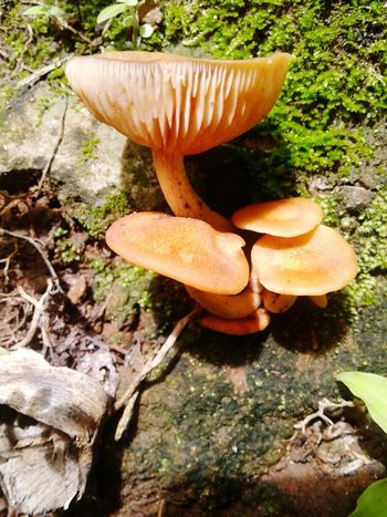 Little World Beatiful Nature Beautiful World Hongos