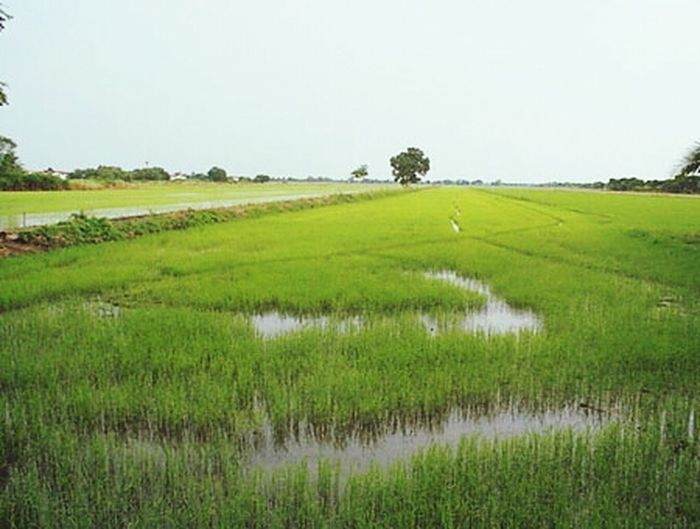 My home,,, I miss you. Field Rice Field Landscape Sky Porn